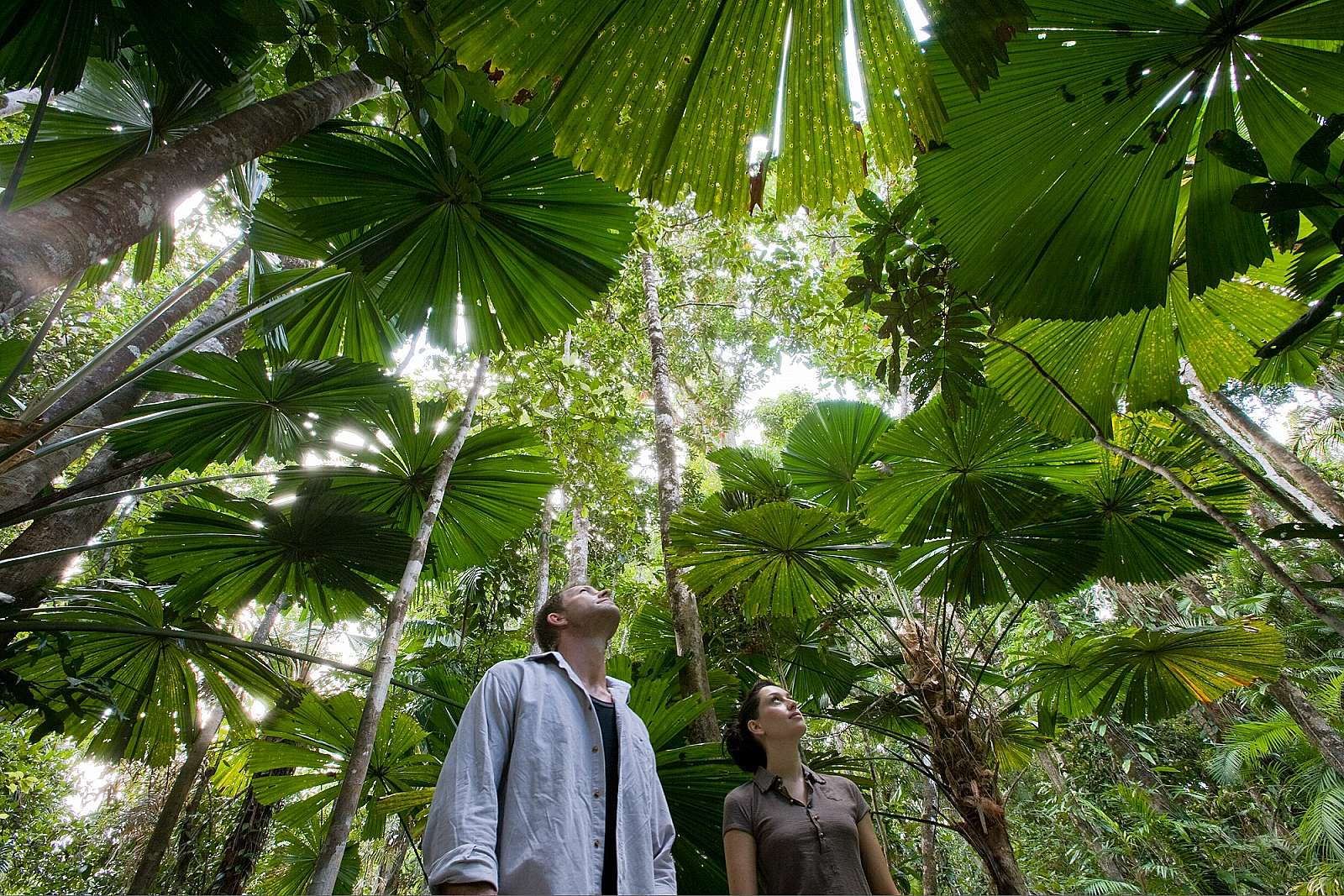 Image for Discovery Tours Australia - 1 Day Daintree & Cape Trib Rainforest Experience ex Cairns & Northern Beaches