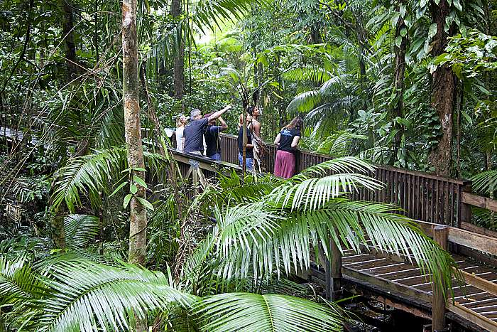 product image for [0820] Mossman Gorge & Daintree Rainforest Tour