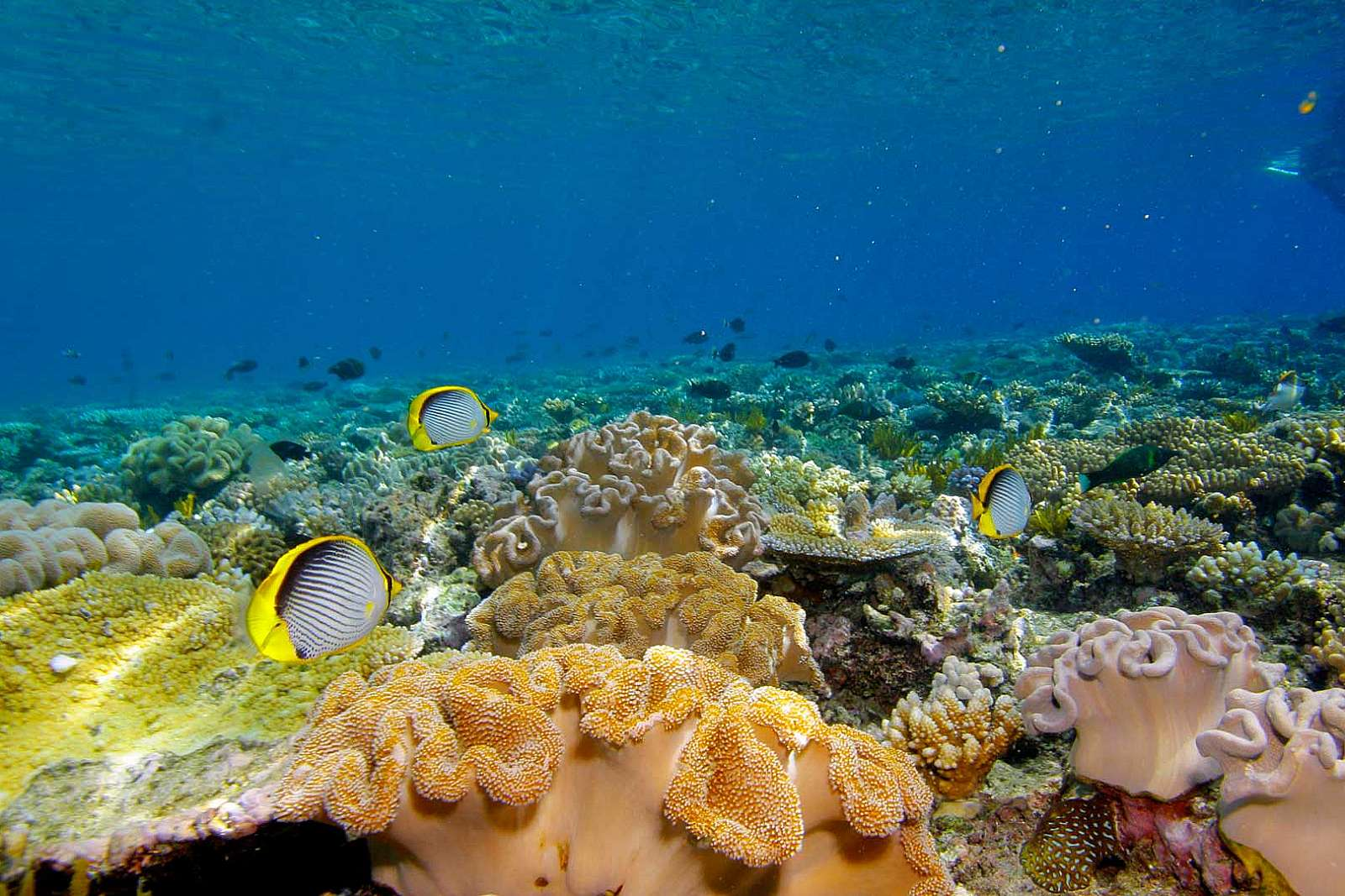 Image for Calypso Snorkel and Dive - Package -  Ultimate Reef