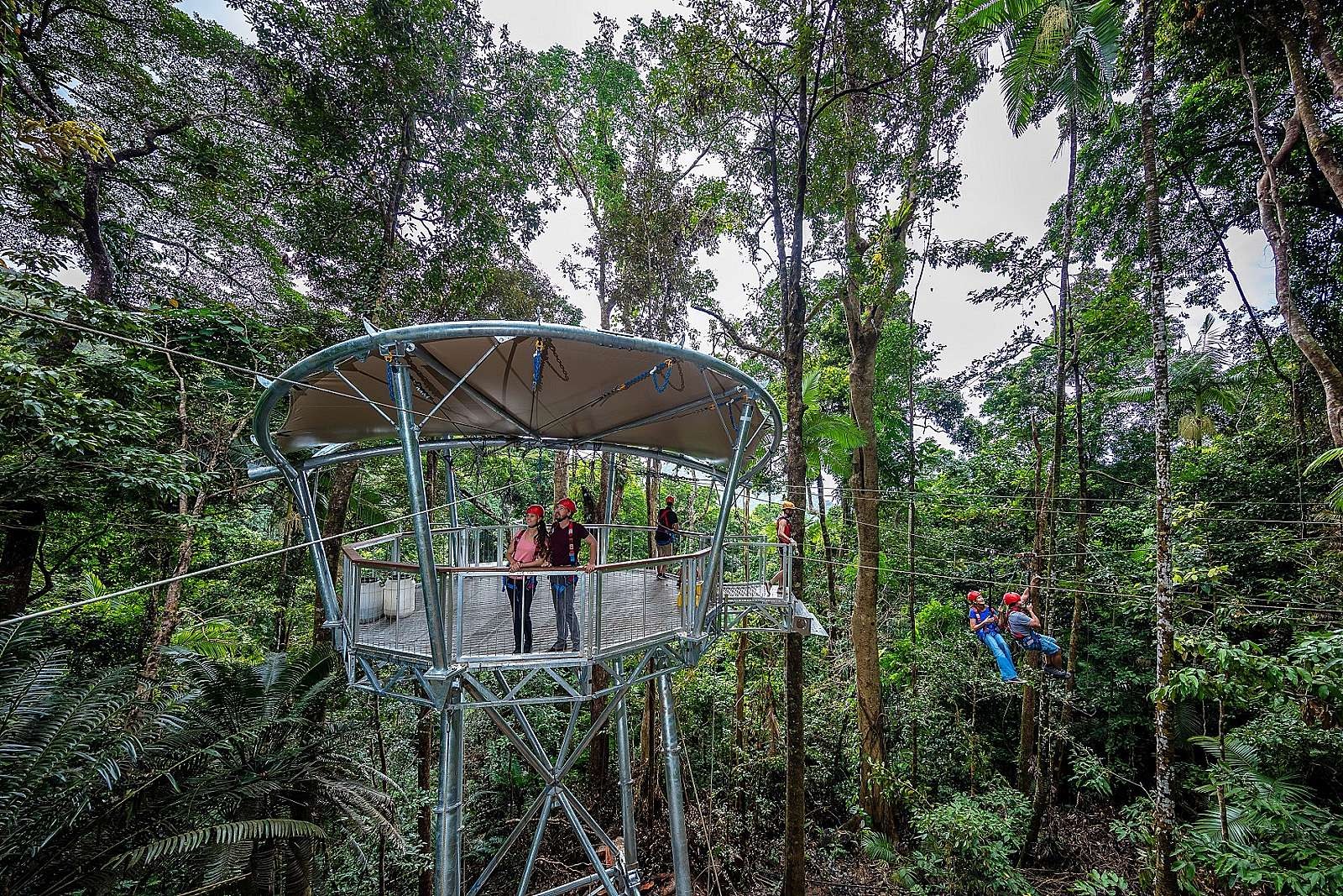 Feature image for Jungle Surfing Canopy Tour