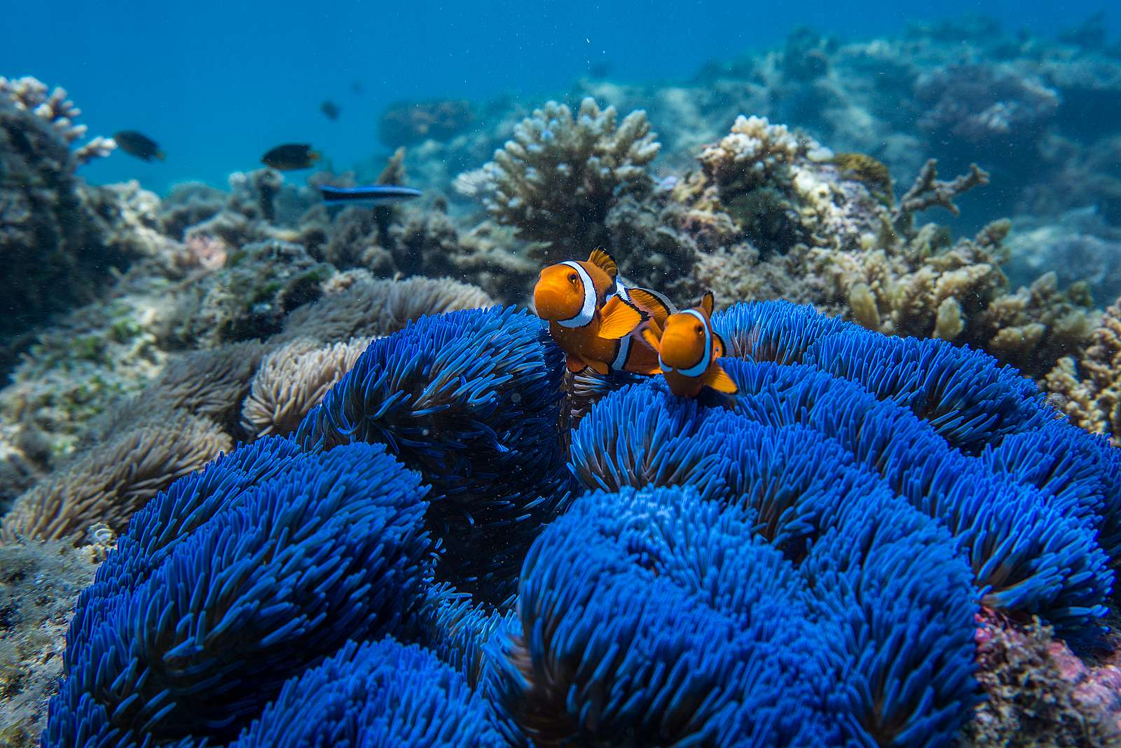 Image for Frankland Island Reef Cruises - Reef Cruise