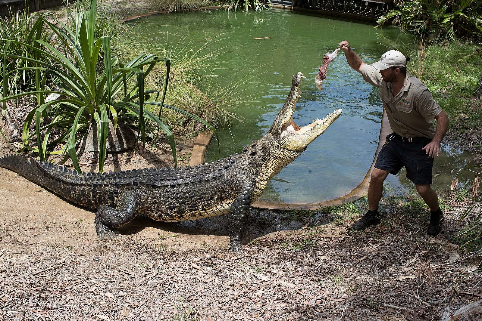Image for Hartleys Crocodile Adventures - Admission - PM (including Transfers)