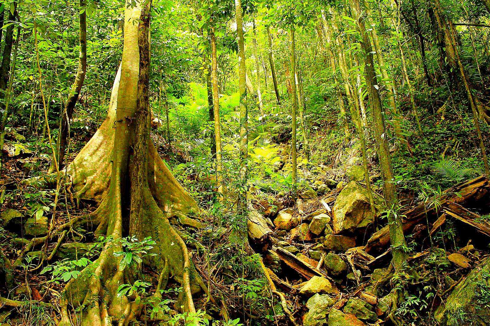 Image for Discovery Tours Australia - Half Day Rainforest & Waterfall Experience - PM